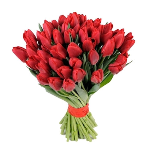 Красные тюльпаны Голландия поштучно (от 50 шт.)