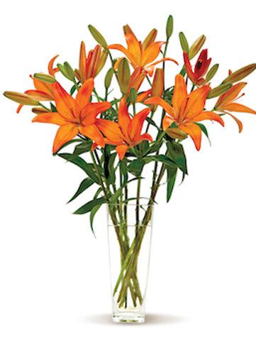 Оранжевые азиатские лилии поштучно