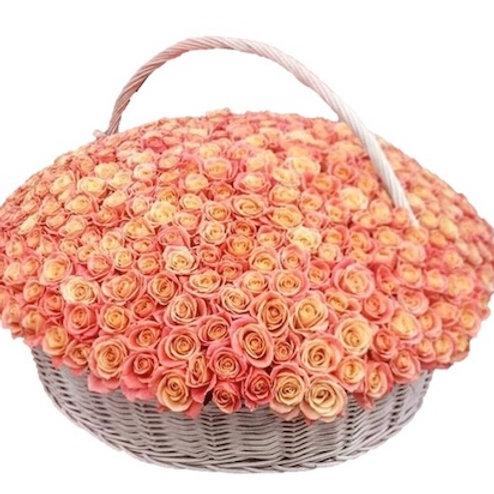 """501 роза """"Мисс Пигги"""" в корзине"""