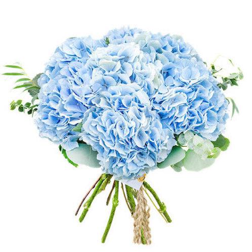 Голубые гортензии поштучно (от 1 шт.)