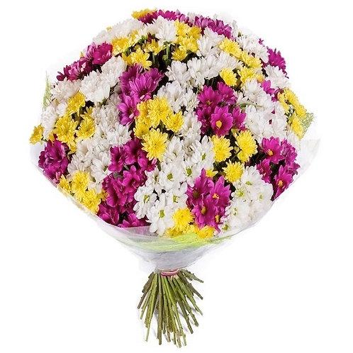 Хризантема кустовая Микс (от 25 шт.)