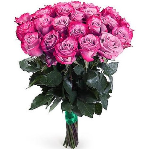 """Розы премиум Эквадор """"Дип Перпл"""" поштучно (от 25 шт.)"""