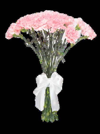 Гвоздика розовая поштучно (от 25 шт.)
