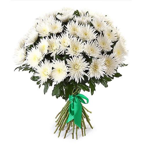 """Белые одноголовые хризантемы """"Анастасия"""" поштучно (от 1 шт.)"""