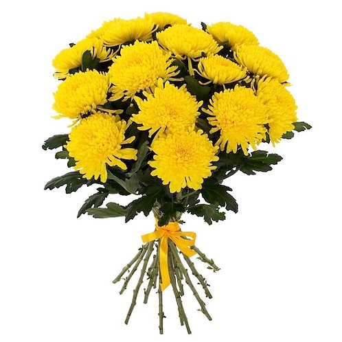 """Желтые одноголовые хризантемы """"Анастасия"""" поштучно (от 1 шт.)"""