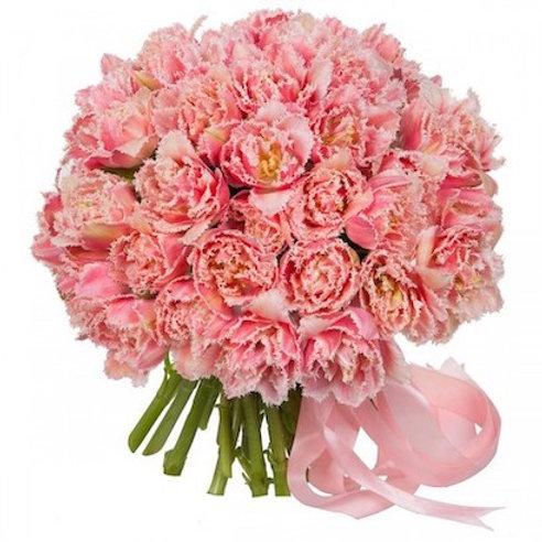 Махровые розовые тюльпаны Куинслэнд