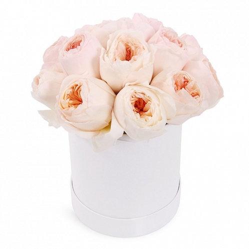 15 пионовидных кремовых роз в шляпной коробке
