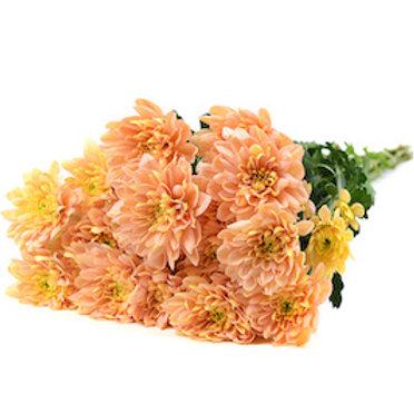 Хризантема кустовая Салмон Балтика (от 5 шт.)