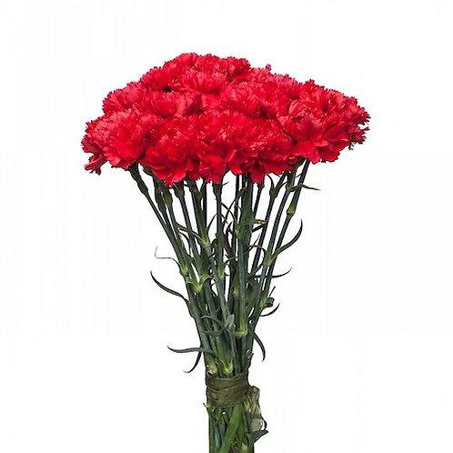 Гвоздика красная (от 25 шт.)