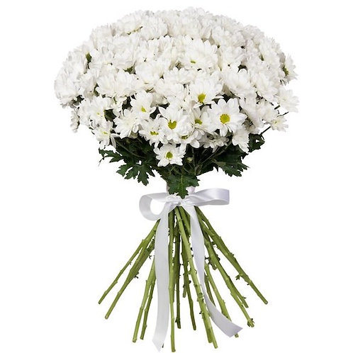 """Белые кустовые хризантемы """"Бакарди"""" поштучно (от 5 шт.)"""
