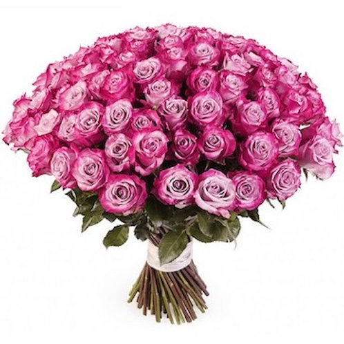 101 роза премиум Эквадор Дип Перпл