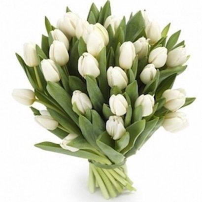 Тюльпаны белые (от 50 шт.)