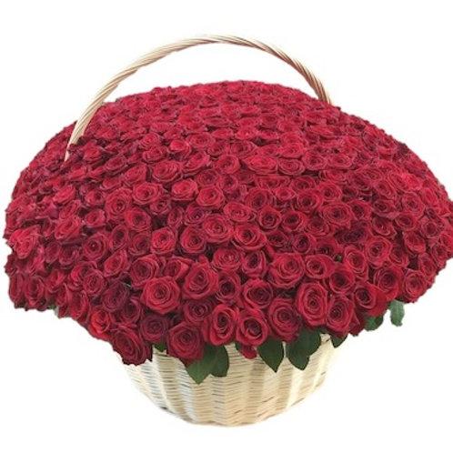 """501 роза """"Ред Наоми"""" в корзине"""