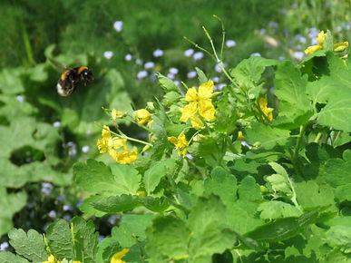 bloemetjes en bijtjes.jpg