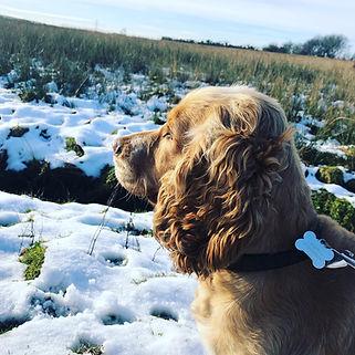 Monty in the snow.jpg