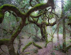 14 Walking trees