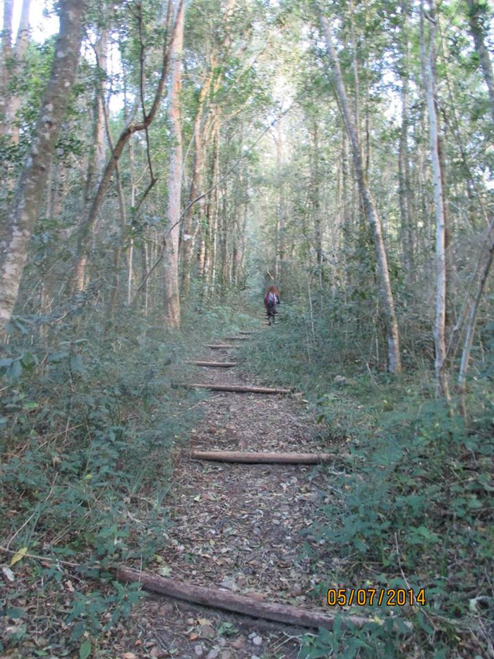 Circles in the Forest -Knysna