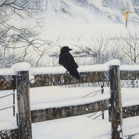 Crow:Snow DSC09082.jpg