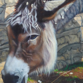 Detail, Sombra, Who Survived the Santa Rosa Tubbs Fire