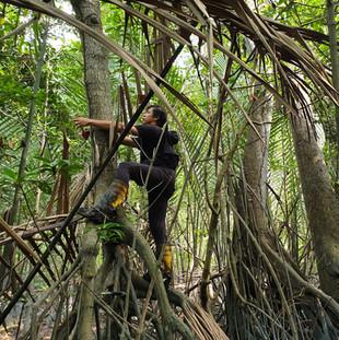 Mangrove Points Project, Klang.jpg