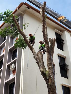 RASB Tree Safety 4.jpg