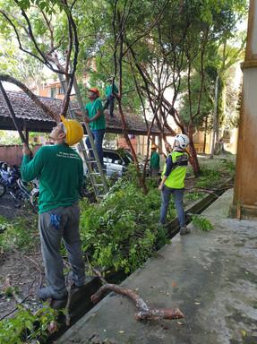 RASB Tree Safety 5.jpg