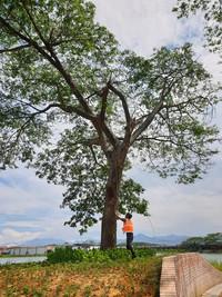 RASB Tree Safety 3.jpg