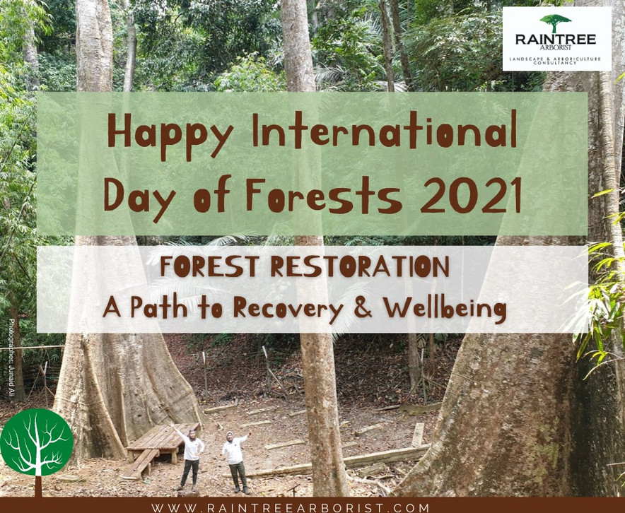 Inat Forest Day 2021.jpg