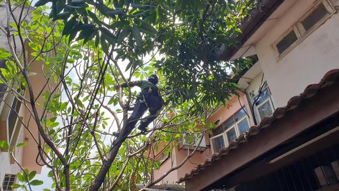 RASB Tree Safety 2.jpg