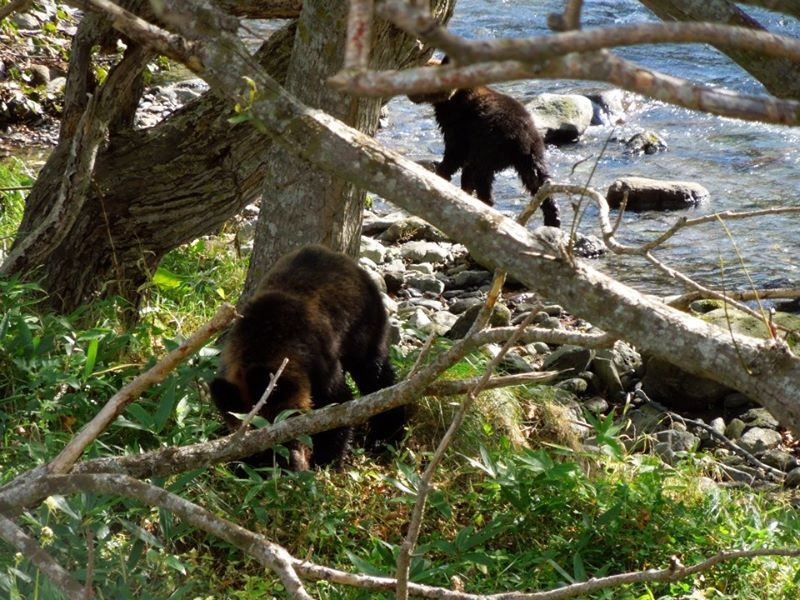 Shiretoko Bears.jpg