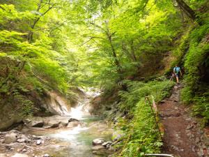 Summer green Nishizawa
