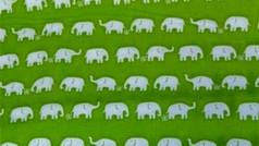 Lime Elephants