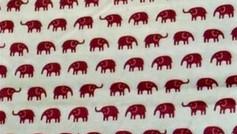 Tan Elephants