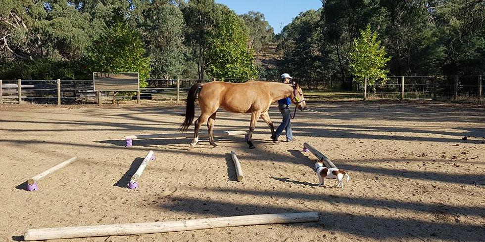 Groundwork for Functional Movement - Wagga Wagga September 2020