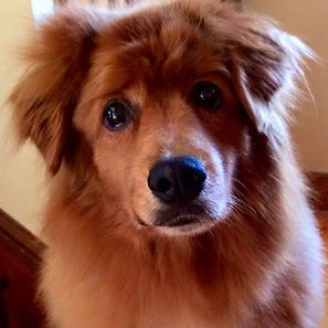 Lisa-Christine-Business-Coach-Motivational-Speaker-dog