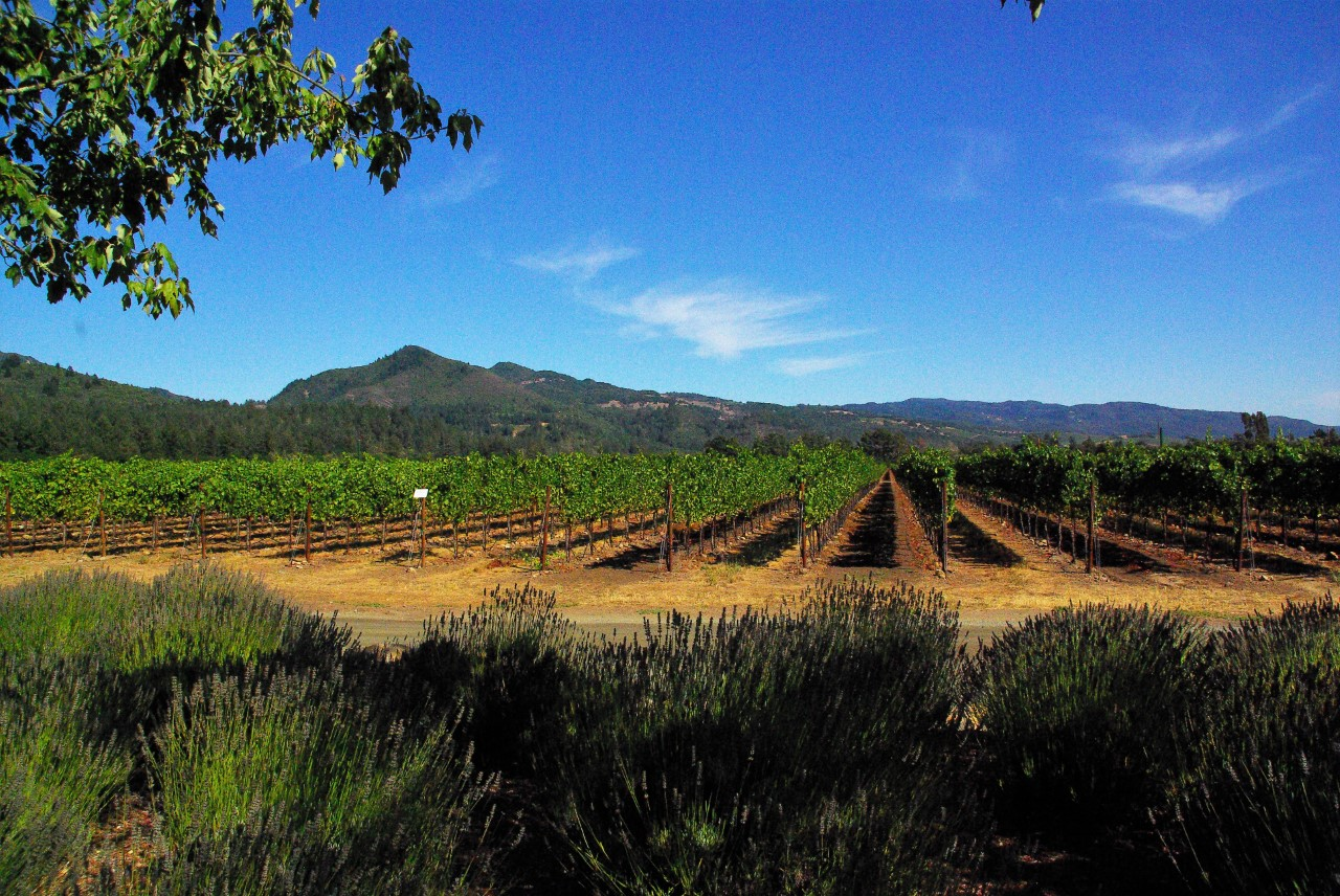 Napa Winery Landscape