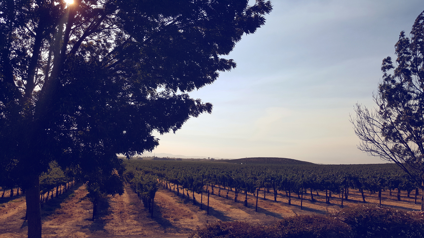 California Vines