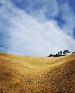 Fields of Gold. Piece of Sky.