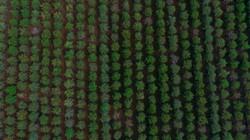 חקלאות בגליל