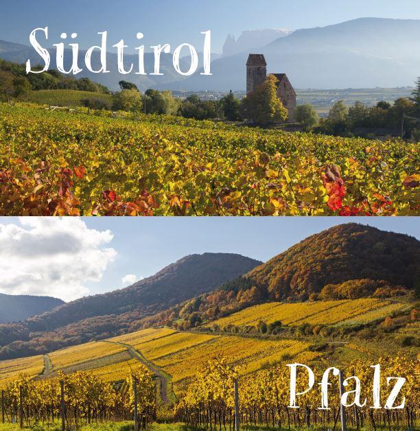 Südtirolmeetspfalz_Weinberge