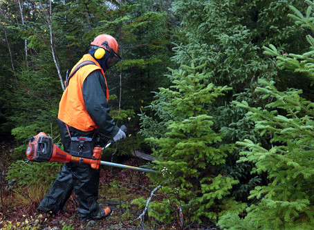 A new forestry season successfully completed for Groupe Regenord workers.