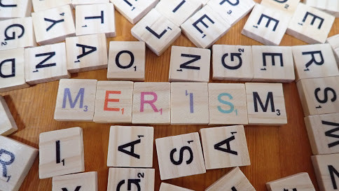 Merisms What are they and how would you use then in spoken English?