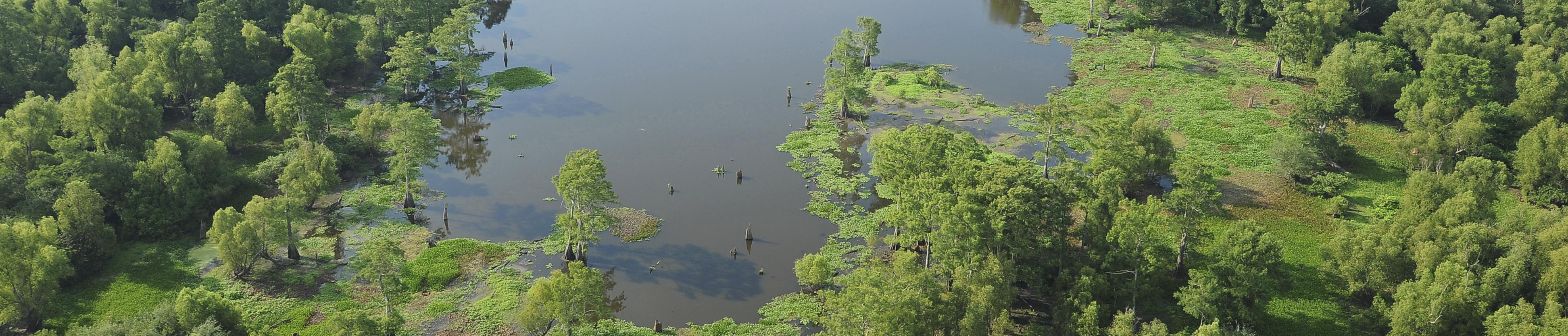 alligator cove-cover
