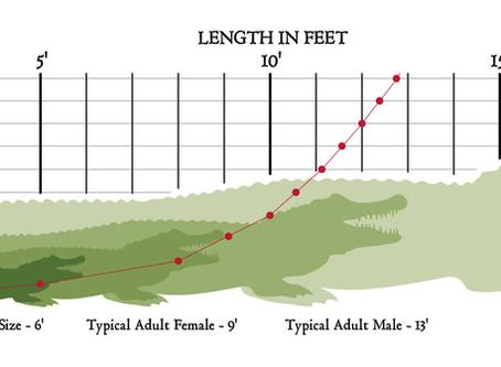 Alligator Length vs. Age