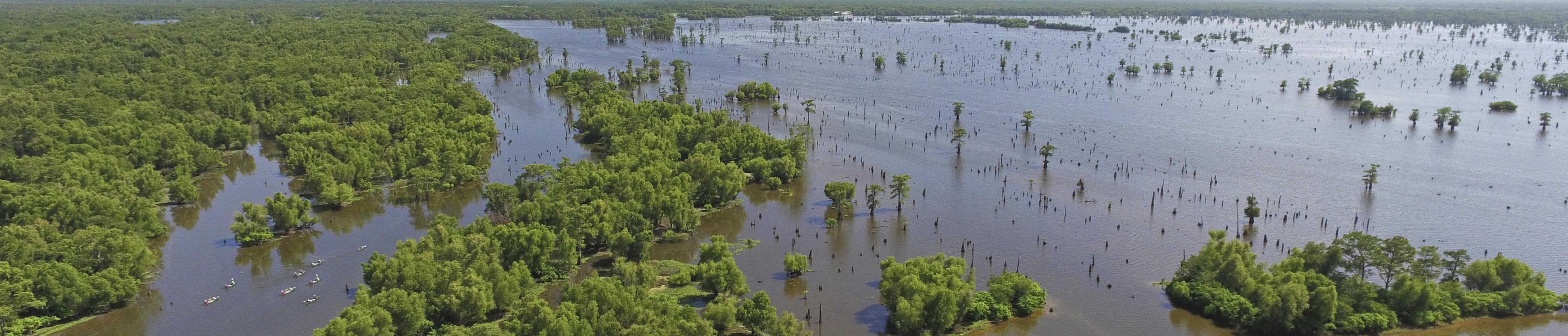 Atchafalaya Swamp aerial