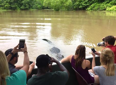 Atchafalaya Basin Swamp Tours!