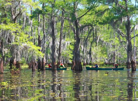 Canoeing in South Louisiana