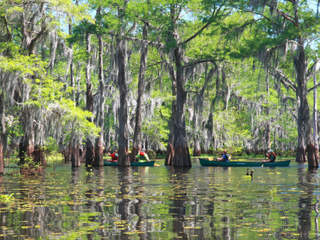 Canoeing in South Louisiana