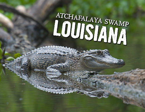 Atchafalaya Alligator Magnet