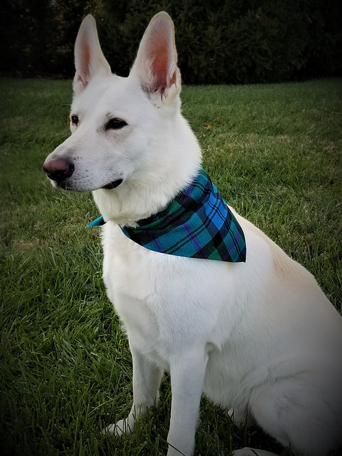 Custom Celtic Tartan Pet Bandana
